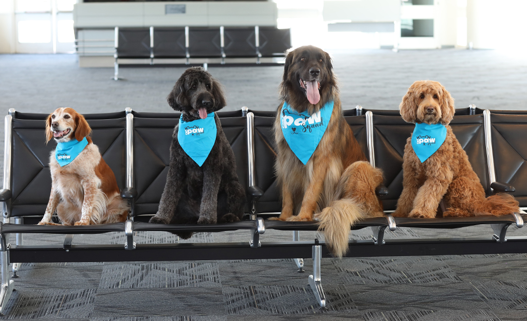 dogs at ontario airport